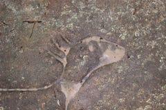Голова кенгуру, аборигенное искусство, Австралия Стоковые Фото