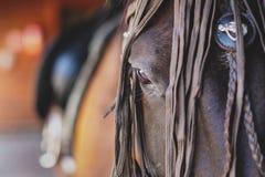 Голова красивой лошади Стоковая Фотография