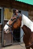 Голова лошади около конюшен Стоковые Изображения