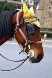 голова лошади с предохранением от уха Стоковые Фотографии RF