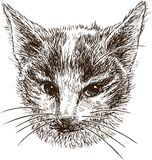 Голова малого котенка Стоковое фото RF