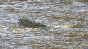 Голова плавания крокодила вверх по потоку в реке mara запаса игры mara masai акции видеоматериалы