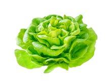 Голова розетки салата салата с падениями воды Стоковая Фотография RF