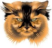 Голова самураев кота Стоковые Изображения RF