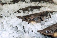 Голова свежей стерляжины на льде стоковые фото