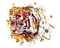 Голова тигра иллюстрации цвета вектора Стоковые Изображения RF