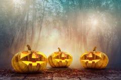 Голова тыквы хеллоуина в пугающей предпосылке древесин Стоковое Изображение RF