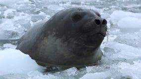 Голова уплотнения конец-вверх между водой и частями льда Andreev сток-видео