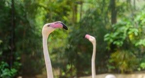 Голова фламинго с естественной предпосылкой стоковая фотография