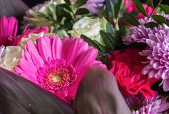 Голова цветка маргаритки gerbera Фото 1 макроса Стоковое фото RF