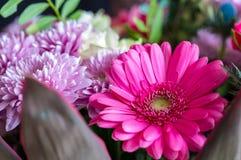Голова цветка маргаритки gerbera Фото 2 макроса Стоковое Изображение