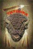 Голова Bull бизона с пер орла Стоковые Изображения