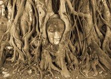 головка Будды Стоковые Фотографии RF