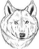 Головка волка иллюстрация штока