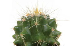 головка кактуса Стоковые Фотографии RF