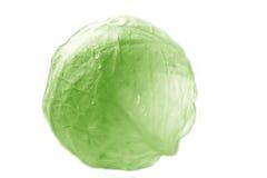 головка капусты Стоковое Изображение RF