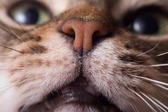 головка кота Стоковые Изображения RF