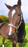 Головка лошади Стоковая Фотография