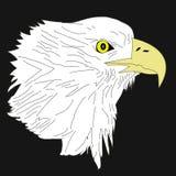 головка орла Стоковое Изображение