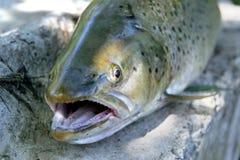 головка рыб детали Стоковое Фото