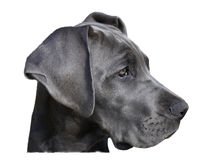 головка собаки Стоковое фото RF