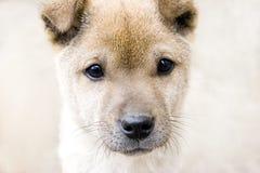 Головка щенка Стоковое Изображение