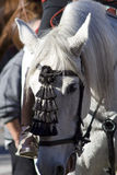 головная белизна лошади 10 Стоковое Изображение RF