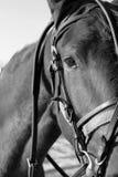 головная лошадь Стоковая Фотография RF