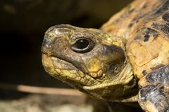 головная черепаха стоковые фото