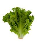 головной салат Стоковая Фотография RF