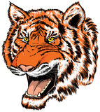 головной тигр Стоковое Изображение