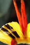 головной убор пера Стоковые Фото