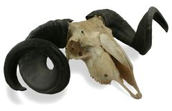 головные штоссели путя Стоковое Изображение RF