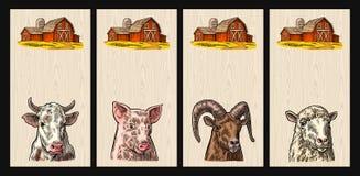 Головы свиньи, коровы, овец и козы изолированные на деревянной предпосылке Стоковые Изображения
