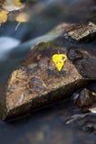 голодает желтый цвет воды листьев Стоковое Фото