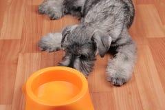 Голодная собака щенка с пустым шаром ждет питаться стоковые фото