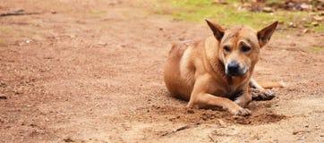 Голодное ожидание бездомной собаки кто-то дает еду на пакостной земле в сельской местности для предпосылки Стоковая Фотография