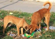 Голодные собаки Стоковые Фотографии RF