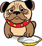 голодный pug Стоковая Фотография
