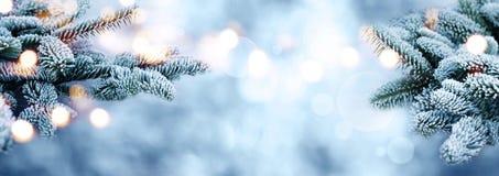 Гололедь предусматривала ветви ели с bokeh в зиме Стоковые Изображения RF