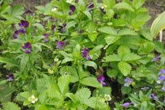 голубая белизна группы цветков Стоковые Изображения RF