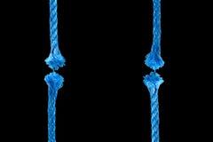 голубая веревочка отрезока Стоковые Изображения RF