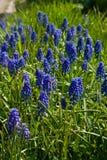 голубая весна цветков стоковые изображения rf