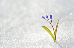 голубая весна цветков стоковое изображение rf