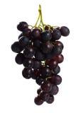 голубая виноградина группы Стоковые Фото