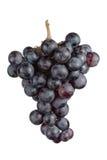 голубая виноградина группы Стоковое Фото