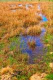 голубая вода весны лужка Стоковые Фотографии RF