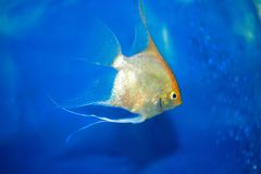 голубая вода рыб Стоковое Фото