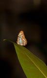 голубая волна бабочки Стоковые Изображения RF