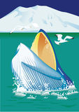 Голубая голова кита Стоковое Изображение RF